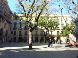 Trees in St. Augustin's square, Barcelona