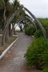 Whalebone arches